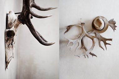 Photographs of antlers for interior design