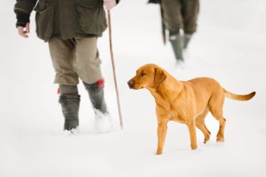 Men walking in the snow with a dog