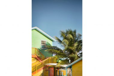 Lifestyle photograph of beach houses and palm tree in Barbados