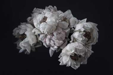 group-of-peonies-from-here-for-you-project-copright-richard-boll-photography